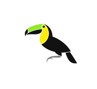 Toucan. Exotic bird from Costa Rica. Vector illustration