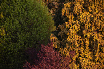 Detail of different tree species in evening sunlight in spring.