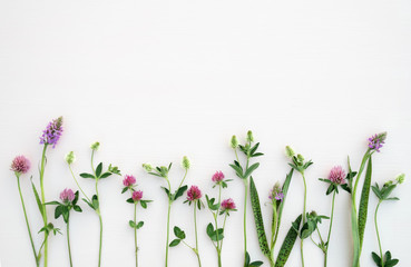 Flower composition. Summer flowers on pastel background. Top view, flat lay.