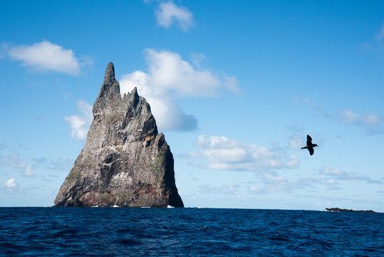 Seabird flying by POV boat Balls Pyramid Lord Howe island