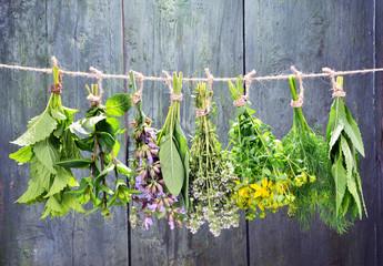 Set of fresh herbs hanging  over wooden vintage background