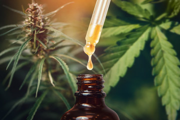 Concept medical marijuana. Cannabis CBD oil extracts in jars herb and leaves