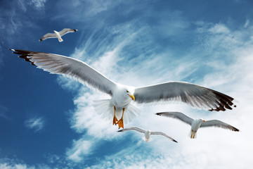 Seagulls flying in the blue sky. Wall mural