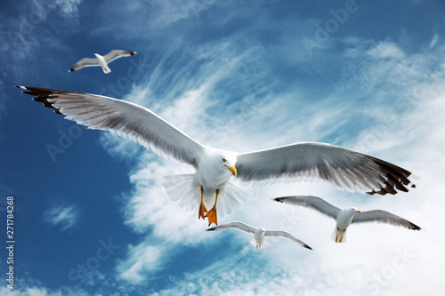 Wall mural Seagulls flying in the blue sky.