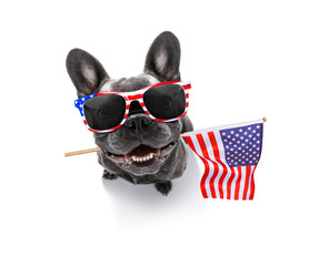 Foto auf AluDibond Crazy dog independence day 4th of july dog