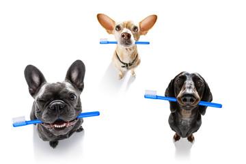 Spoed Fotobehang Crazy dog dental toothbrush row of dogs