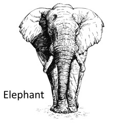 Hand drawn sketch style elephant isolated on white background. Vector illustration.