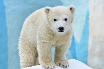 Photo sur Plexiglas Ours Blanc polar bear