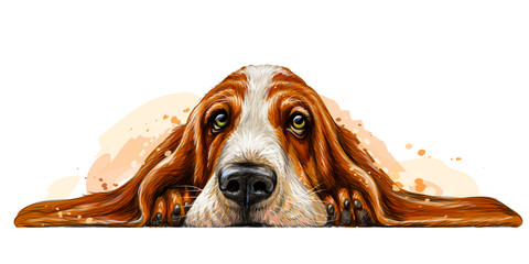 Dog breed Basset Hound. The sticker on the wall in the form of a color art drawing of a portrait of a dog with watercolor splashes.