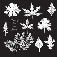Set with white  leaves of trees and flowers on black background. Hand drawn ink sketch.