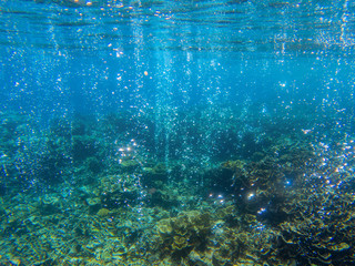 Underwater landscape with tropical fish and coral reef. Sparkling oxygen bubbles from seabottom. Marine animal wildlife.
