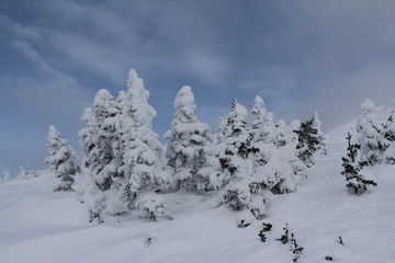 Schneebedeckt im Sonnenschein