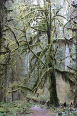 Moos bewachsende Bäume