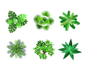 Trees top view for architectural or landscape design. Plants, trees and palms set