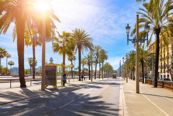 Photo sur Aluminium Barcelone Barcelona, Spain. Road for public transport and alley of palm trees. Sunny summer day. Urban street landscape with bus station.