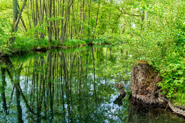 Landschaft und Meditation in Mecklenburg: Im Naturraum Nebeltal bei Kuchelmiß am Krakower See