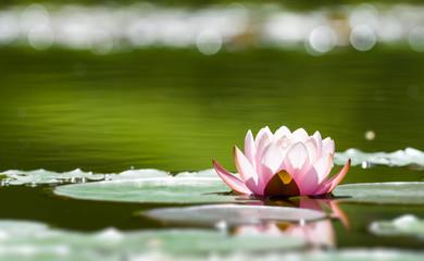Foto op Textielframe Waterlelies Seerose im Gegenlicht