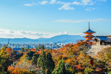 Fototapeten Kyoto A stunning panoramic view of the Kyoto city with the colourful maple tree leaves and the pagoda at the foreground at Kiyomizu-dera.