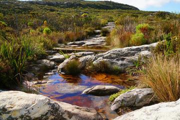Bächlein auf dem Weg zum Gipfel des Tafelberges