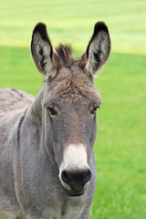 Photo sur Plexiglas Ane beautiful portrait of a donkey