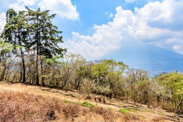 Dry vegetation on hillside at end of dry season & Agua volcano behind (Volcán de Agua) outside Antigua, Guatemala, Central America