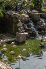 Printed kitchen splashbacks Peacock Bird park Taman Burung in Kuala Lumpur