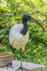 Wall Murals Ostrich Bird park Taman Burung in Kuala Lumpur