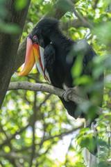 Türaufkleber Straus Bird park Taman Burung in Kuala Lumpur