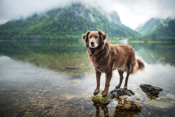 Dog in beautiful landscape. Dog at the lake between mountains. Travel with mans best friend.