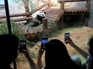 People visit a panda pavilion at a zoo in Moscow