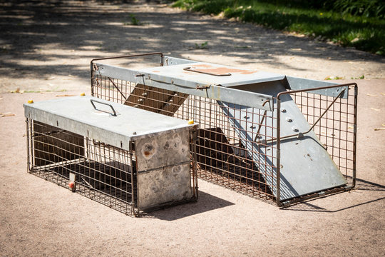 Rodent traps for animal control to catch squirrel/raccoon/rat
