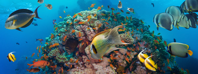 Poster Coral reefs Coral and fish
