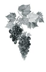 Wine.Grape leaves seamless pattern.