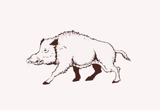 Vintage  wild boar standing,graphical illustration,sepia