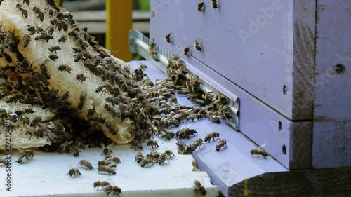 Wall mural Bees produce honey. Close view. Slow motion.