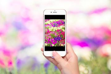 スマートフォンで花畑を写真撮影するイメージ画像