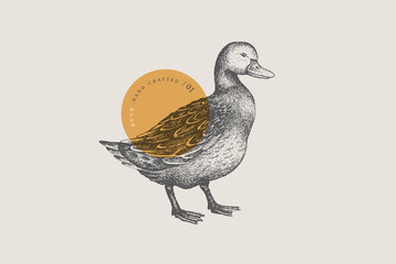 Graphical drawn duck. Hand-drawn retro picture with a poultry in an engraving style. Can be used for menu restaurants, for packaging in markets and shops. Vector vintage illustrations.