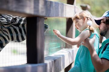Zoo visitors feeding zebra through the fence
