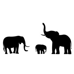 pictures elephants live in Africa