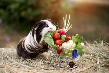 guinea pig and fruits