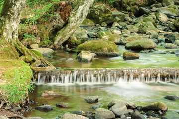 refreshing stream in the forest. beautiful nature scenery in summertime. rocks among the brook with grassy shore. trunk in the water form a small cascade