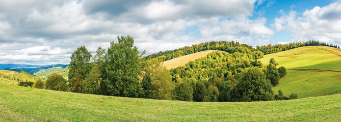 forest on the edge of a meadow in mountains. beautiful panorama of carpathian mountains in early autumn. bright weather with clouds on the sky