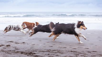 Grupo de perros corriendo por la playa