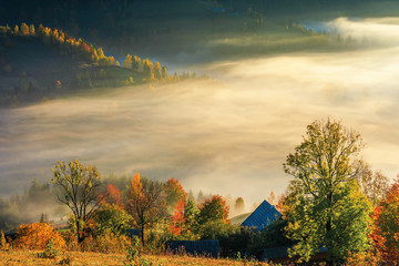 glowing fog at sunrise in mountains. wonderful countryside autumn scenery. mixed forest on near the village outskirts. colorful nature background. matisesti area of apuseni national park, romania
