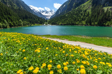 Wall Mural - Austrian alpine landscape with blooming meadows in the springtime. Austria, Tyrol, Stillup Lake, Zillertal