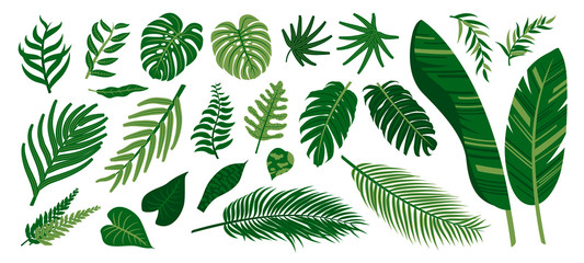 Wall Mural - Tropical leaves on white background vector illustration