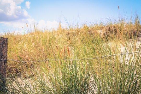 Gräser auf der Düne