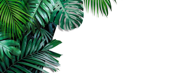 Tropical leaves banner on white background with copy space Wall mural