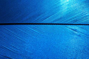 piece of blue bird feathers, close-up.