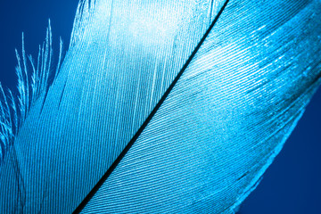 piece of blue bird feathers, close-up.